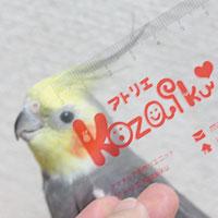 Kozaiku名刺でオカメの羽冠を測る